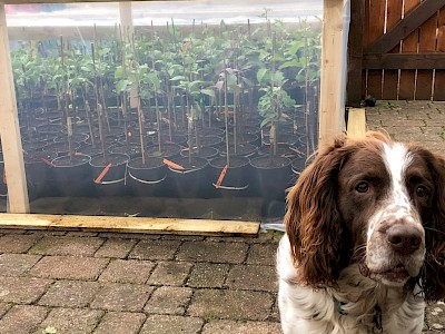Nelson guarding our best grafts 10th May